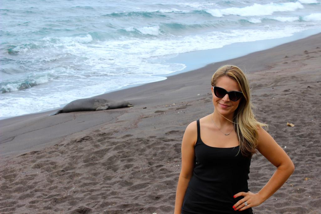 Maui Hawaiian Monk Seal